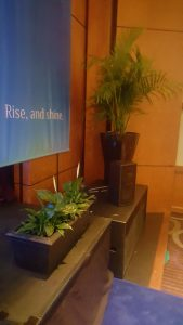 conference-plant-hire-sunshine-coast-56