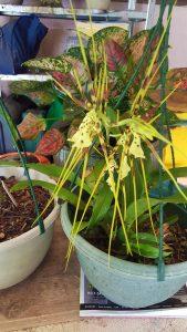 event-decoration-hire-sunshine-coast-plants