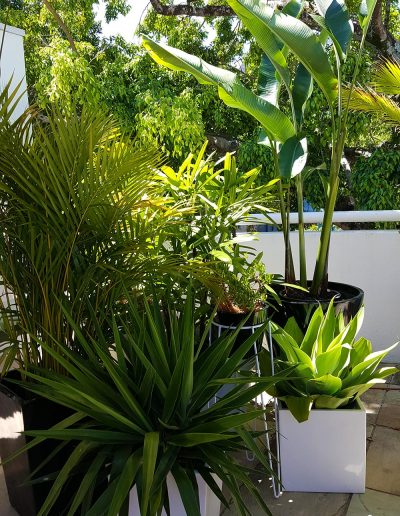 event-plant-hire-sunshine-coast-22