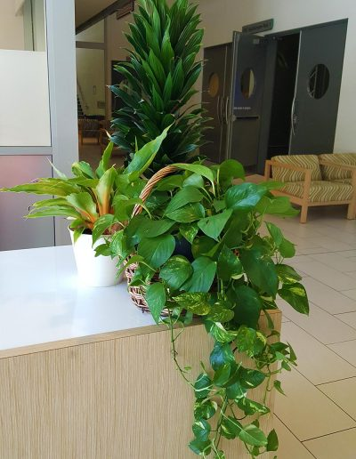 event-plant-hire-sunshine-coast-25