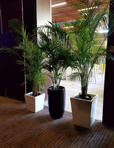 event-plant-hire-sunshine-coast-29