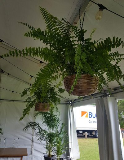 event-plant-hire-sunshine-coast-39