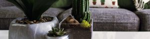 plants make healthy indoor spaces