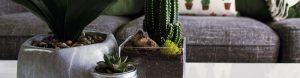 plants make healthy indoor spaces