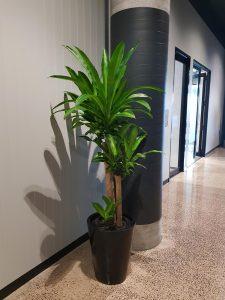 office-plant-hire-sunshine-coast