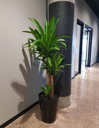 office-plant-hire-sunshine-coast-02