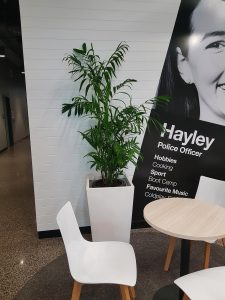 office-plant-hire-sunshine-coast