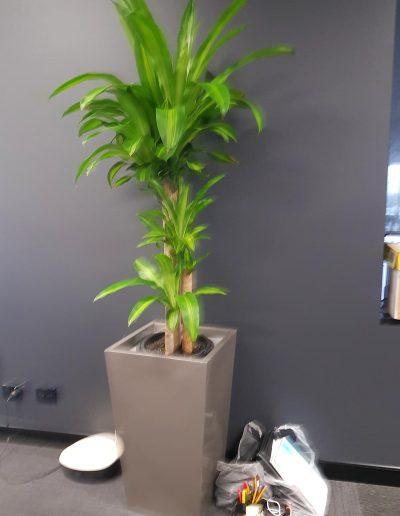 office-plant-hire-sunshine-coast-06