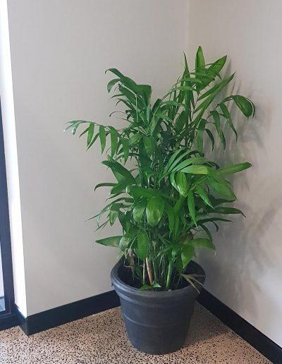 office-plant-hire-sunshine-coast-95