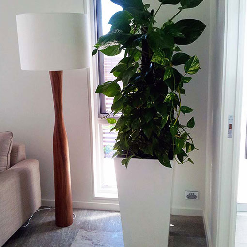 plant-hire-for-display-homes
