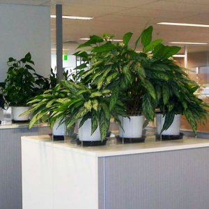 plant-hire-for-offices-workplace