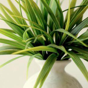 hire plants-make-homes-liveable